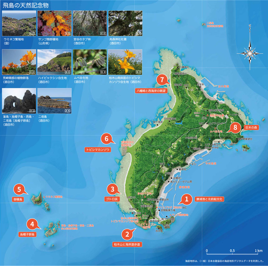 ジオパーク 飛島エリア地図