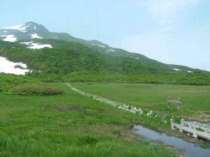 龍ヶ原湿原