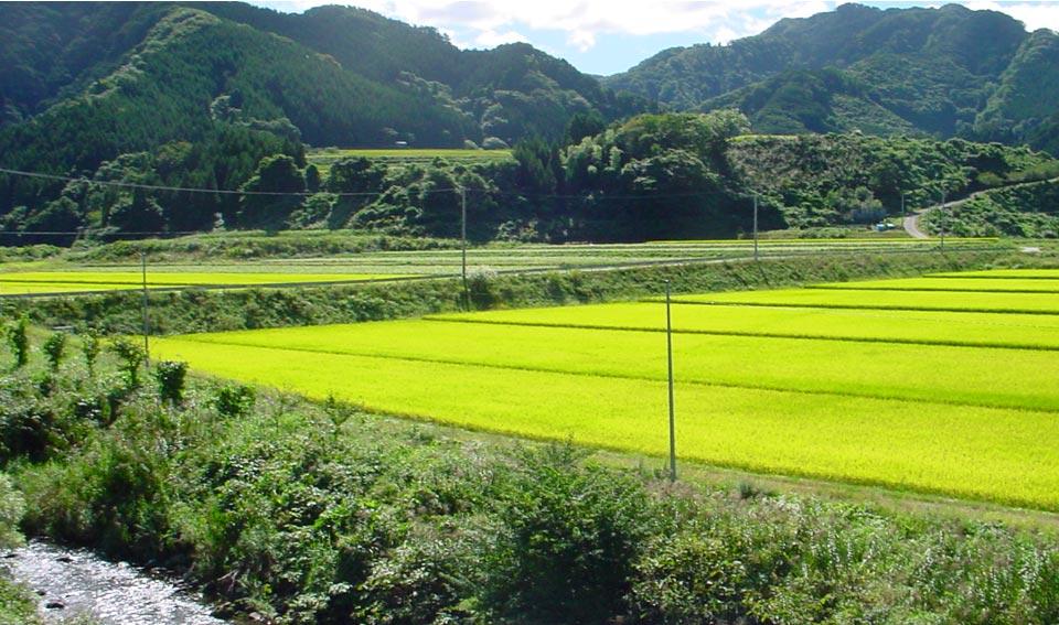 arasegawa